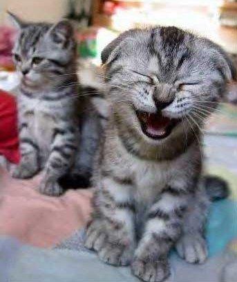 catlaugh