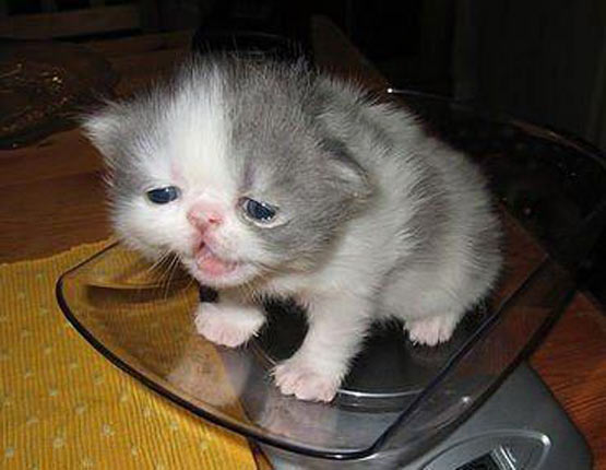 confused_tired_kitten